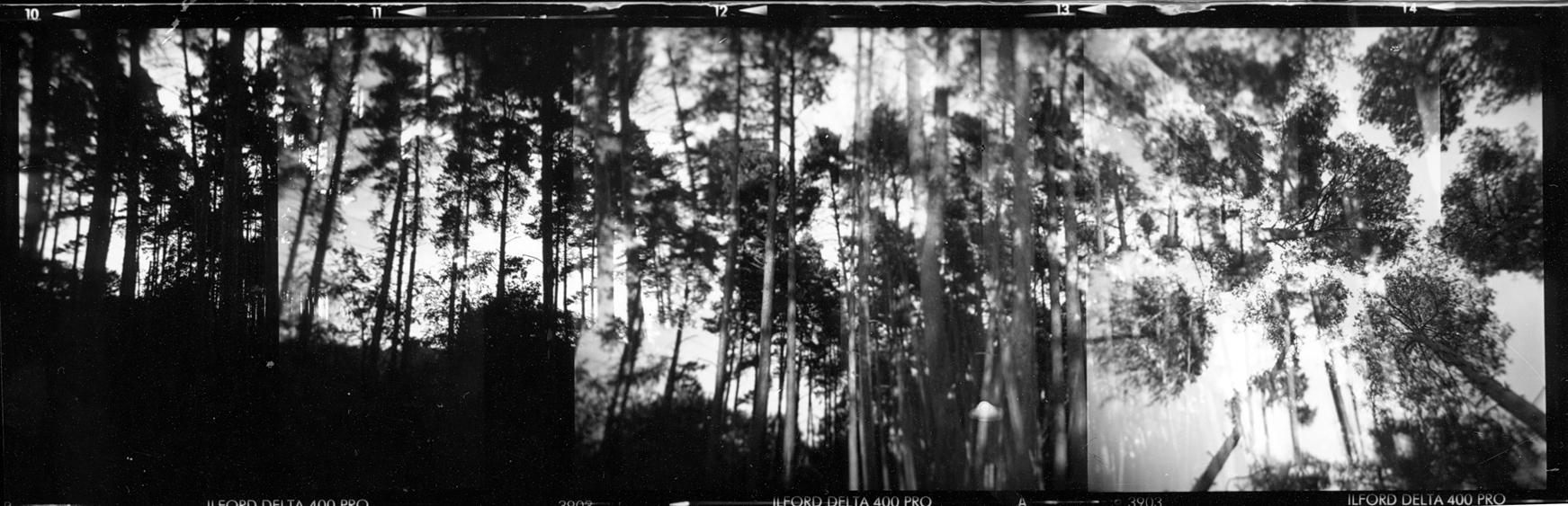 http://www.tomcops.com/files/gimgs/17_trees1.jpg